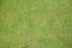 Rasen gepflegt Dublin 2012-klein